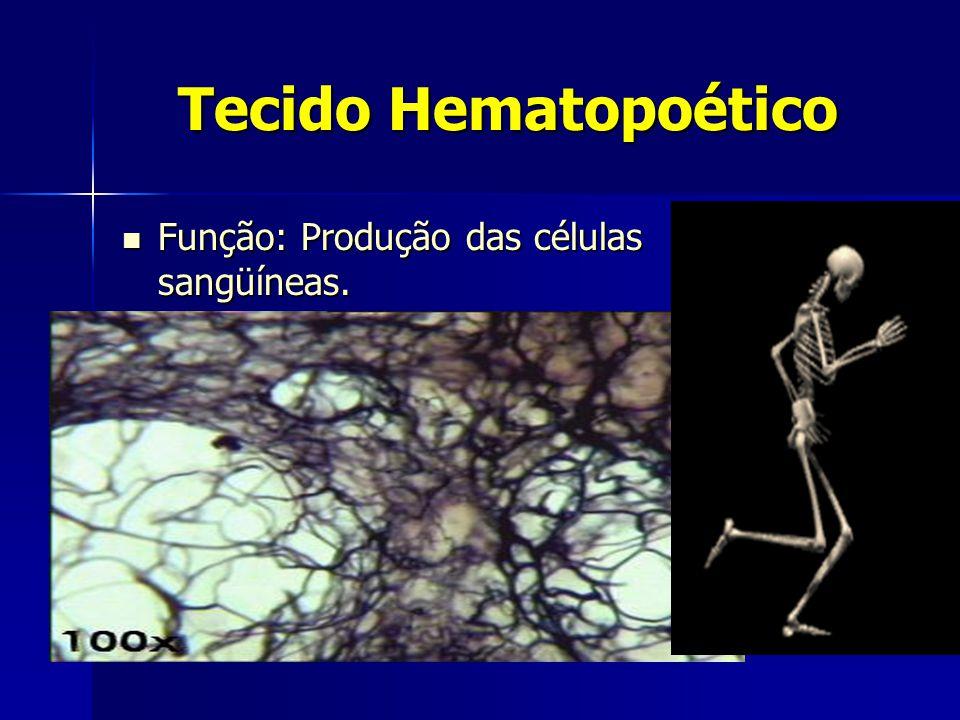 Tecido Hematopoético  Função: Produção das células sangüíneas.