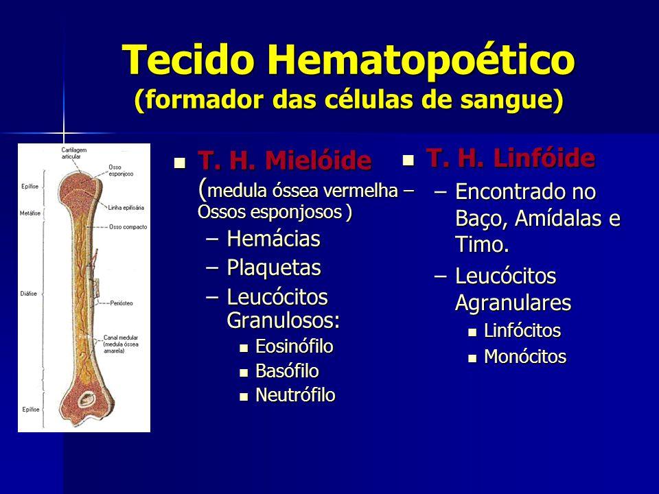 Tecido Hematopoético (formador das células de sangue)  T. H. Mielóide ( medula óssea vermelha – Ossos esponjosos ) –Hemácias –Plaquetas –Leucócitos G