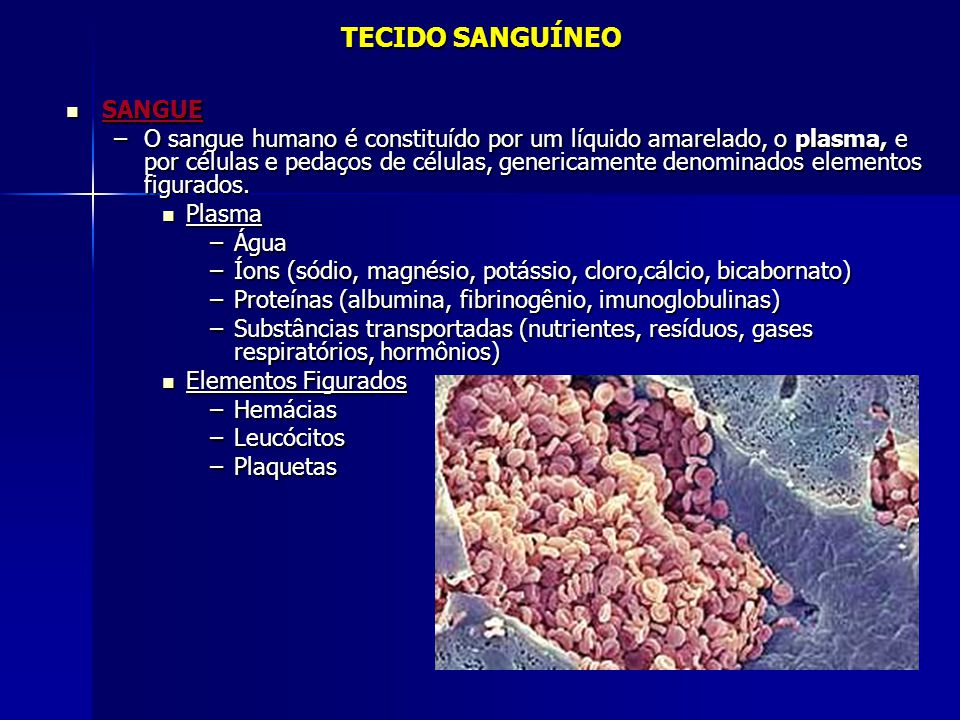 TECIDO SANGUÍNEO  SANGUE –O sangue humano é constituído por um líquido amarelado, o plasma, e por células e pedaços de células, genericamente denomin