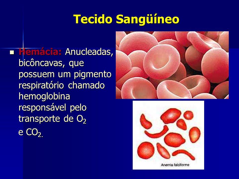 Tecido Sangüíneo  Hemácia: Anucleadas, bicôncavas, que possuem um pigmento respiratório chamado hemoglobina responsável pelo transporte de O 2 e CO 2