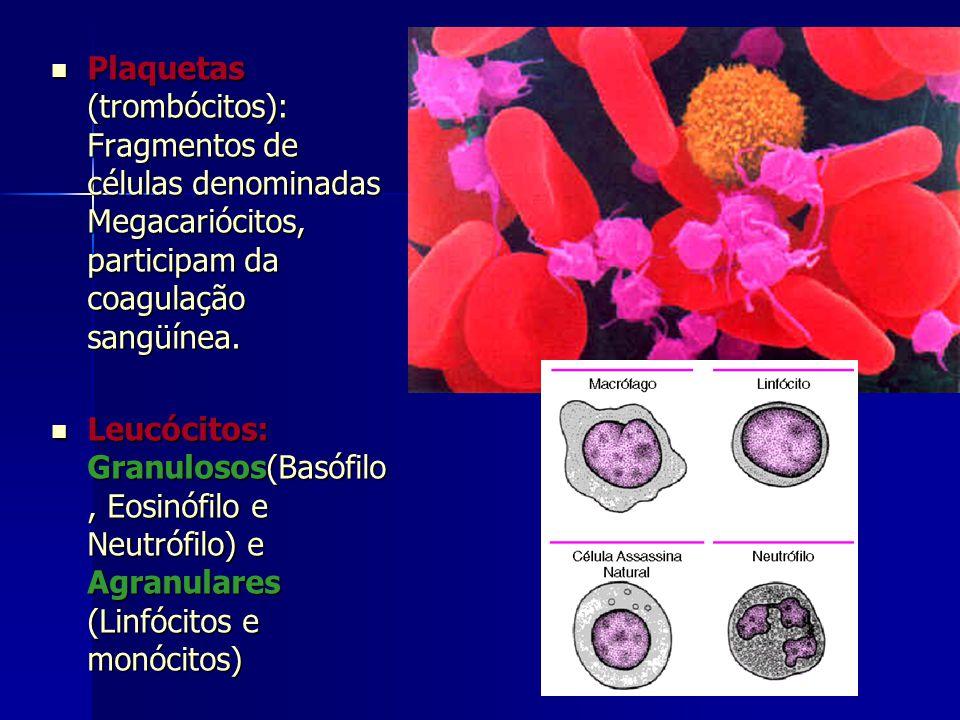  Plaquetas (trombócitos): Fragmentos de células denominadas Megacariócitos, participam da coagulação sangüínea.  Leucócitos: Granulosos(Basófilo, Eo