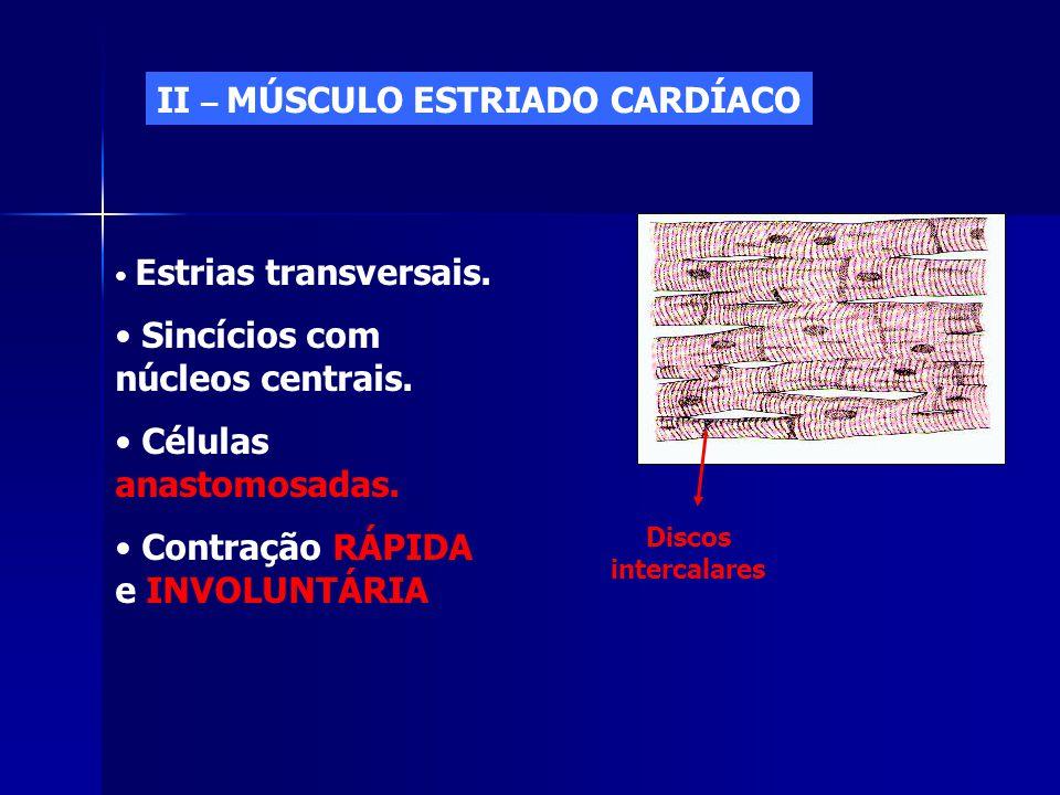 II – MÚSCULO ESTRIADO CARDÍACO • Estrias transversais. • Sincícios com núcleos centrais. • Células anastomosadas. • Contração RÁPIDA e INVOLUNTÁRIA Di