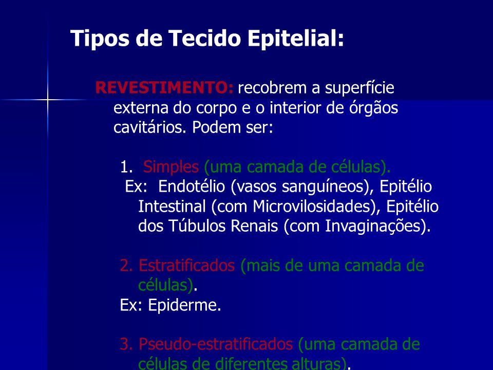 Tipos de Tecido Epitelial: REVESTIMENTO: recobrem a superfície externa do corpo e o interior de órgãos cavitários.