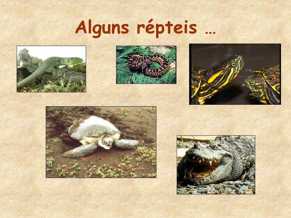 OS RÉPTEIS •Geralmente, têm o corpo coberto de escamas e alguns têm uma carapaça com placas.