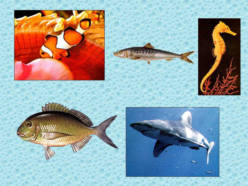 OS PEIXES •Os peixes vivem e respiram dentro da água.