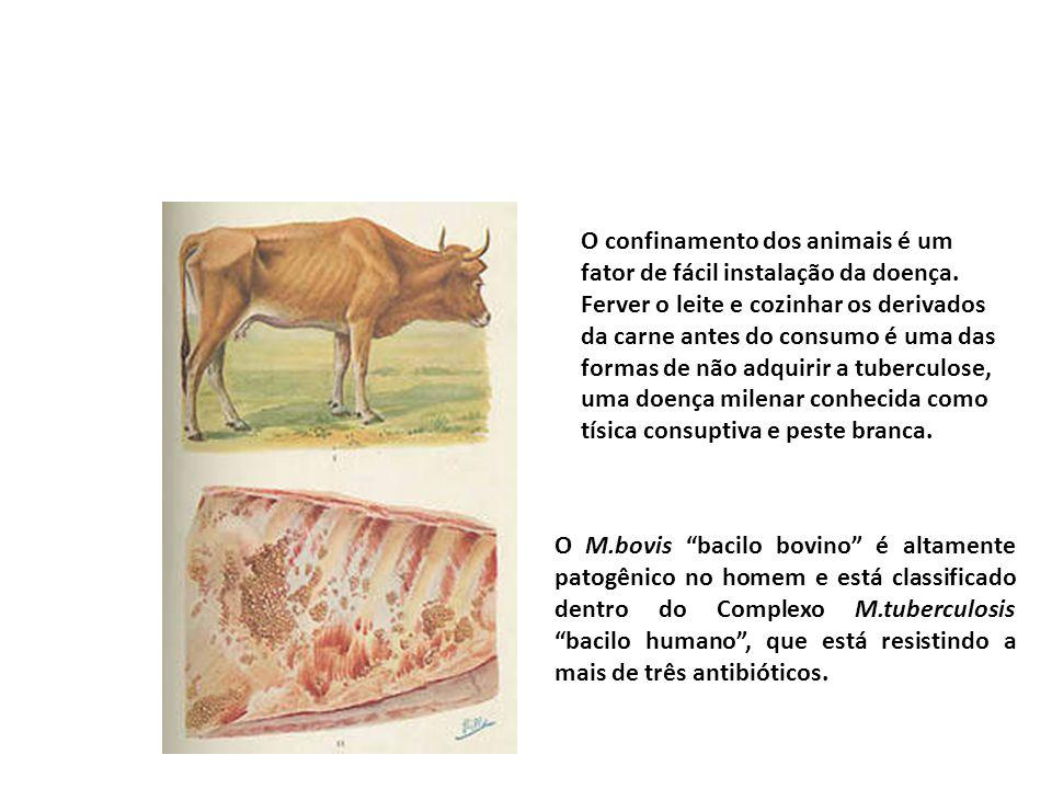 O confinamento dos animais é um fator de fácil instalação da doença. Ferver o leite e cozinhar os derivados da carne antes do consumo é uma das formas