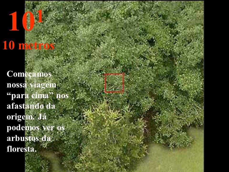 É a distância de olharmos um ramo de folhas com o braço esticado. 10 0 1 metro