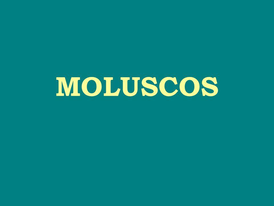 ♦ Phylum Mollusca → grupo grande e variado 120.000 espécies vivas 40.000 espécies fósseis ■ Grupo cosmopolita → encontrado em todos os tipos de águas (doces, salobras e marinhas).