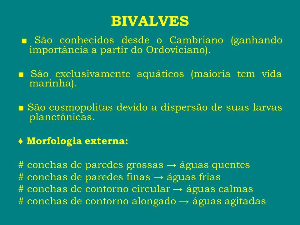 BIVALVES ■ São conhecidos desde o Cambriano (ganhando importância a partir do Ordoviciano). ■ São exclusivamente aquáticos (maioria tem vida marinha).