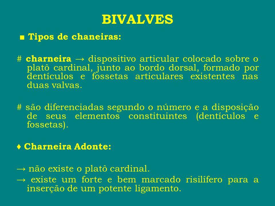 ■ Tipos de chaneiras: # charneira → dispositivo articular colocado sobre o platô cardinal, junto ao bordo dorsal, formado por dentículos e fossetas ar