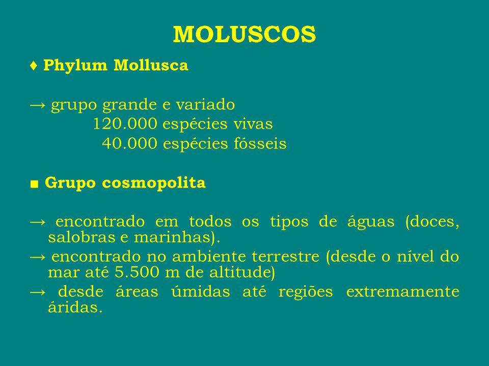 ♦ Phylum Mollusca → grupo grande e variado 120.000 espécies vivas 40.000 espécies fósseis ■ Grupo cosmopolita → encontrado em todos os tipos de águas