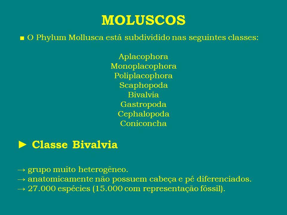 ■ O Phylum Mollusca está subdividido nas seguintes classes: Aplacophora Monoplacophora Poliplacophora Scaphopoda Bivalvia Gastropoda Cephalopoda Conic