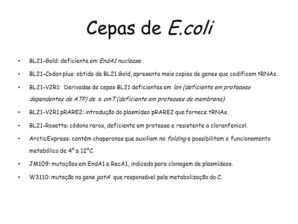 Cepas de E.coli • BL21-Gold: deficiente em EndA1 nuclease • BL21-Codon plus: obtida da BL21 Gold, apresenta mais copias de genes que codificam tRNAs.