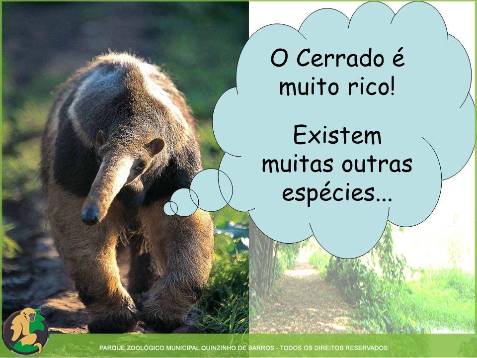 O Cerrado é muito rico! Existem muitas outras espécies...