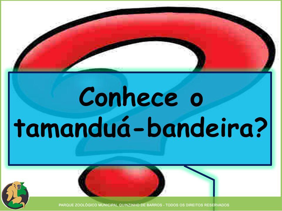 Conhece o tamanduá-bandeira?