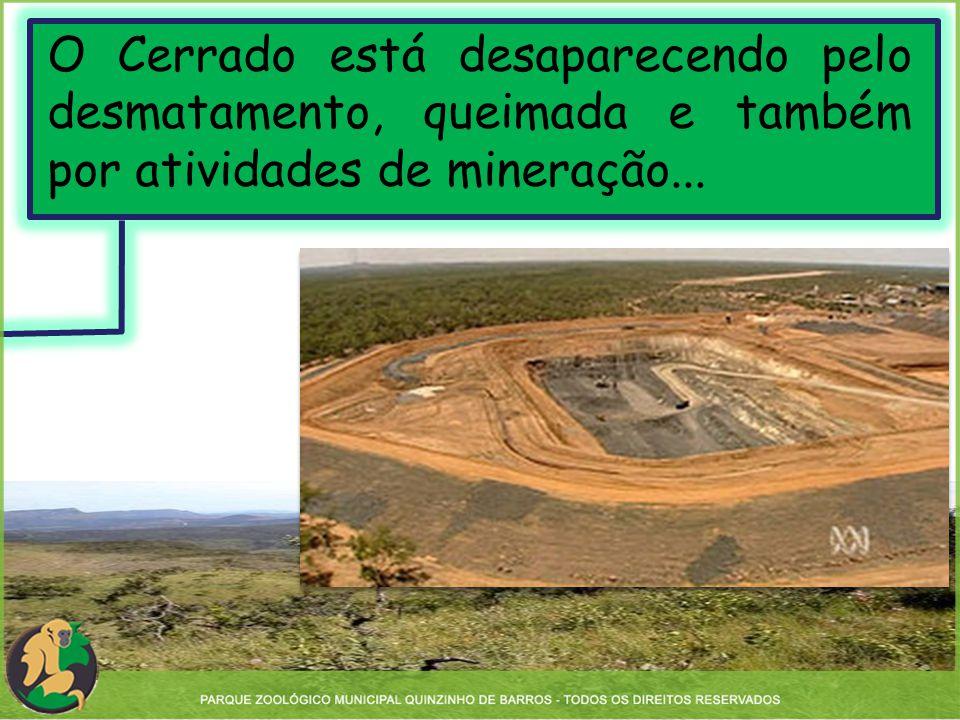 O Cerrado está desaparecendo pelo desmatamento, queimada e também por atividades de mineração...
