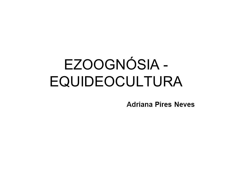 EZOOGNÓSIA - EQUIDEOCULTURA Adriana Pires Neves
