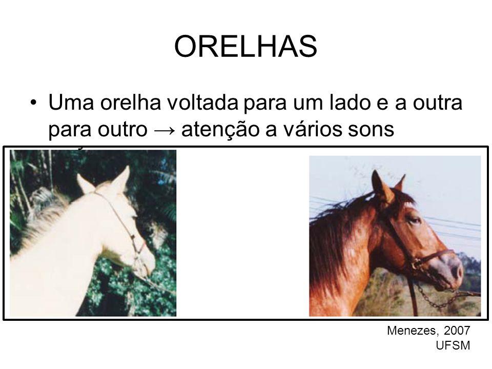 ORELHAS •Uma orelha voltada para um lado e a outra para outro → atenção a vários sons Menezes, 2007 UFSM