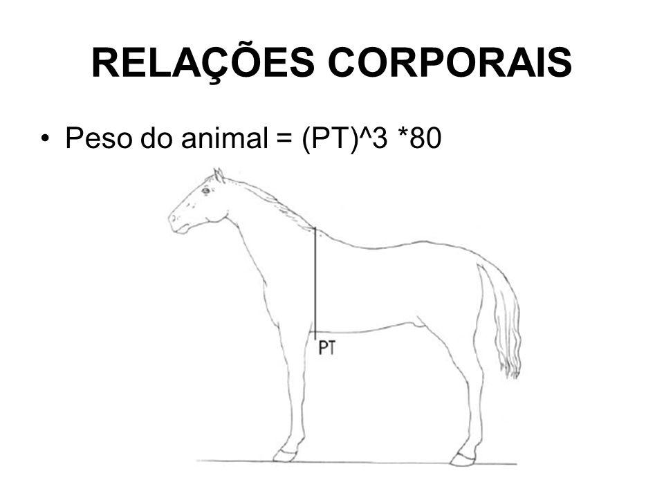 RELAÇÕES CORPORAIS •Peso do animal = (PT)^3 *80