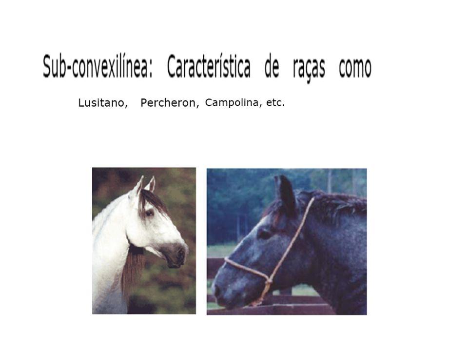 Foto 1 – Irritação profunda Foto 2 – Com cachimbo de cotenção Foto 3 – Se alimentando Foto 4 – Apresentando animal as costas Menezes, 2007 UFSM