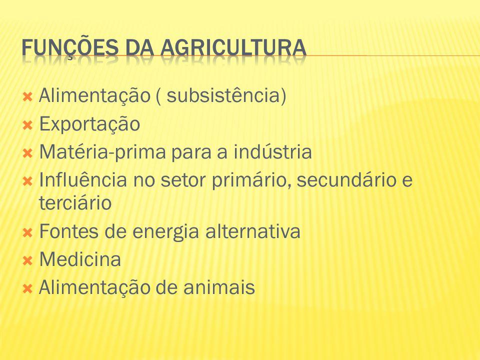  Alimentação ( subsistência)  Exportação  Matéria-prima para a indústria  Influência no setor primário, secundário e terciário  Fontes de energia
