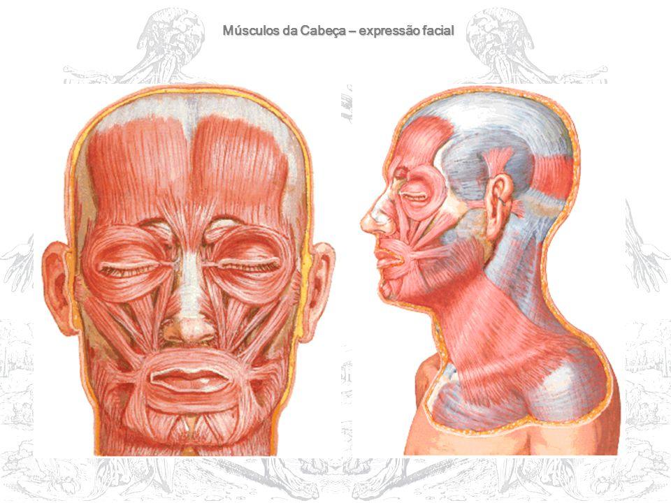 Músculos da Cabeça – expressão facial