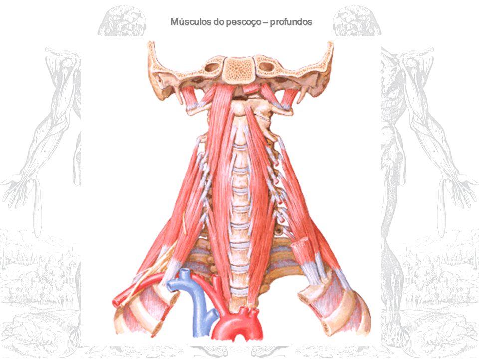 Músculos do pescoço – profundos