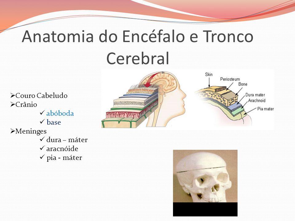Anatomia do Encéfalo e Tronco Cerebral  Couro Cabeludo  Crânio  abóboda  base  Meninges  dura – máter  aracnóide  pia - máter