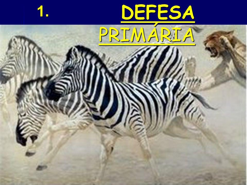 1. DEFESA PRIMÁRIA