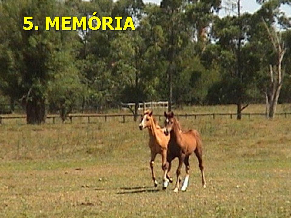 5. MEMÓRIA