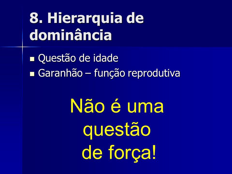8. Hierarquia de dominância  Questão de idade  Garanhão – função reprodutiva Não é uma questão de força!