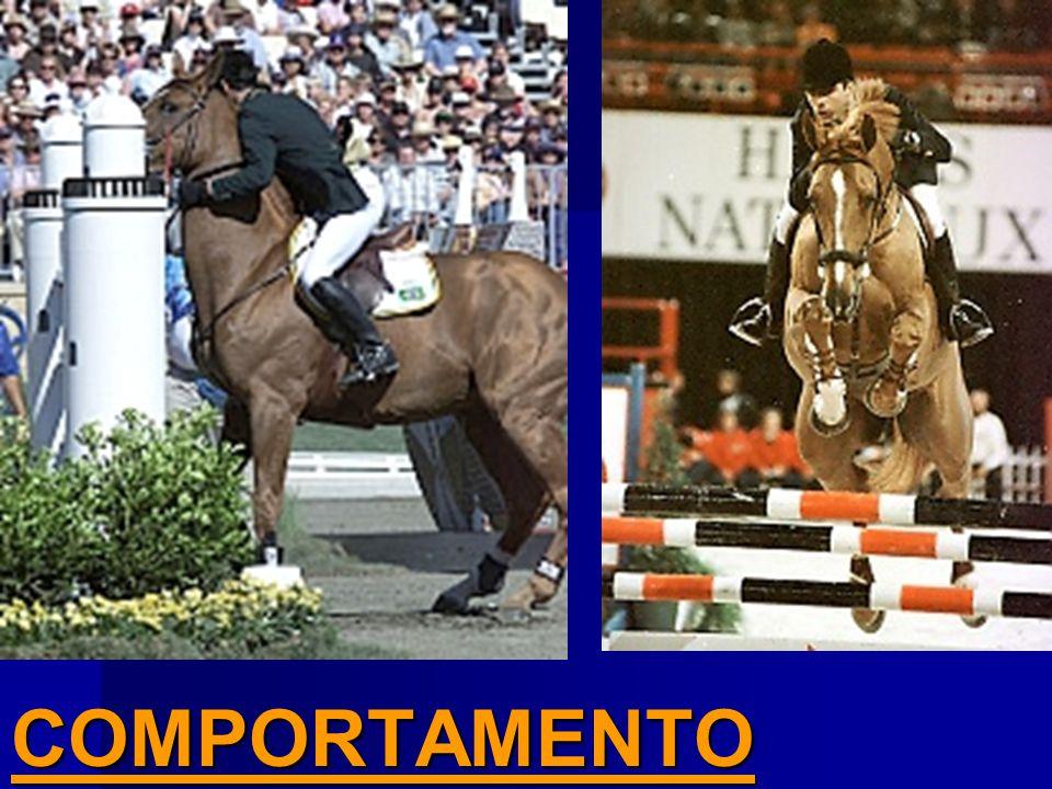 Desconhece as características e linguagem naturais do cavalo.