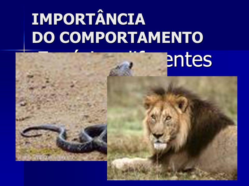 IMPORTÂNCIA DO COMPORTAMENTO  Espécies diferentes se comunicam e se comportam de forma diferente!