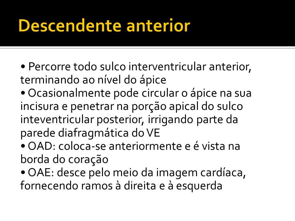 • Percorre todo sulco interventricular anterior, terminando ao nível do ápice • Ocasionalmente pode circular o ápice na sua incisura e penetrar na porção apical do sulco inteventricular posterior, irrigando parte da parede diafragmática do VE • OAD: coloca-se anteriormente e é vista na borda do coração • OAE: desce pelo meio da imagem cardíaca, fornecendo ramos à direita e à esquerda