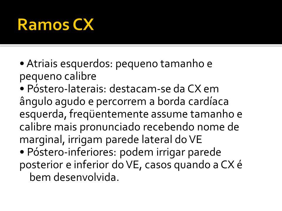 • Atriais esquerdos: pequeno tamanho e pequeno calibre • Póstero-laterais: destacam-se da CX em ângulo agudo e percorrem a borda cardíaca esquerda, fr