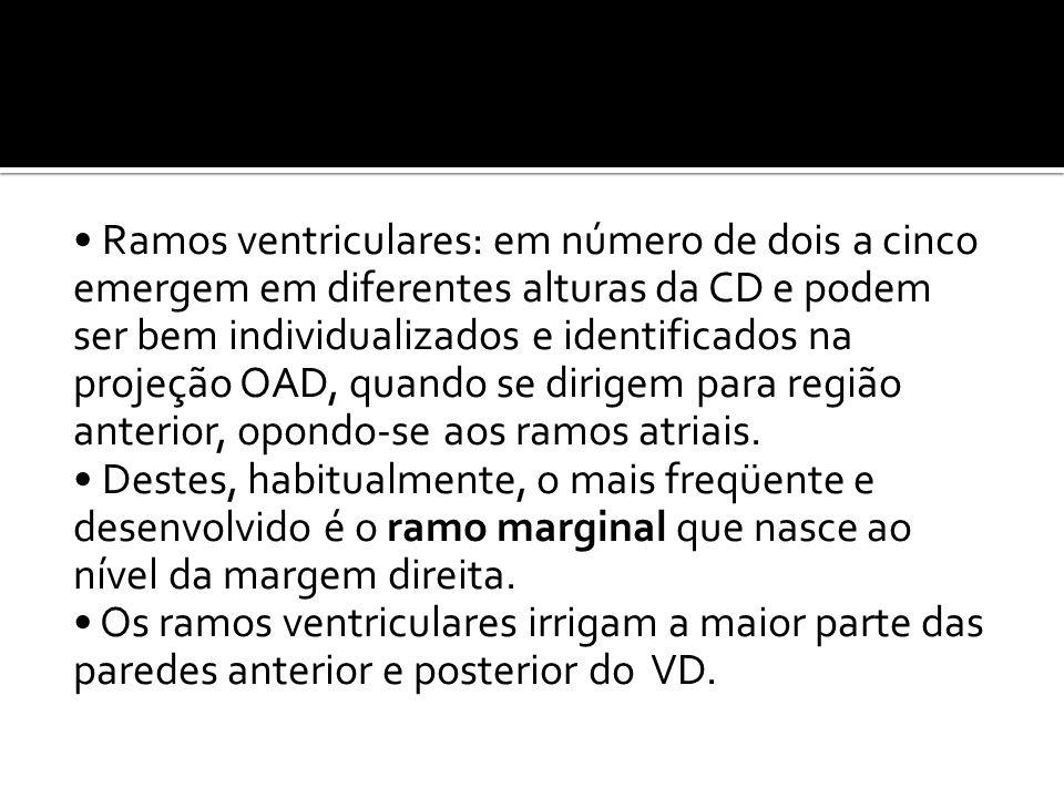 • Ramos ventriculares: em número de dois a cinco emergem em diferentes alturas da CD e podem ser bem individualizados e identificados na projeção OAD,