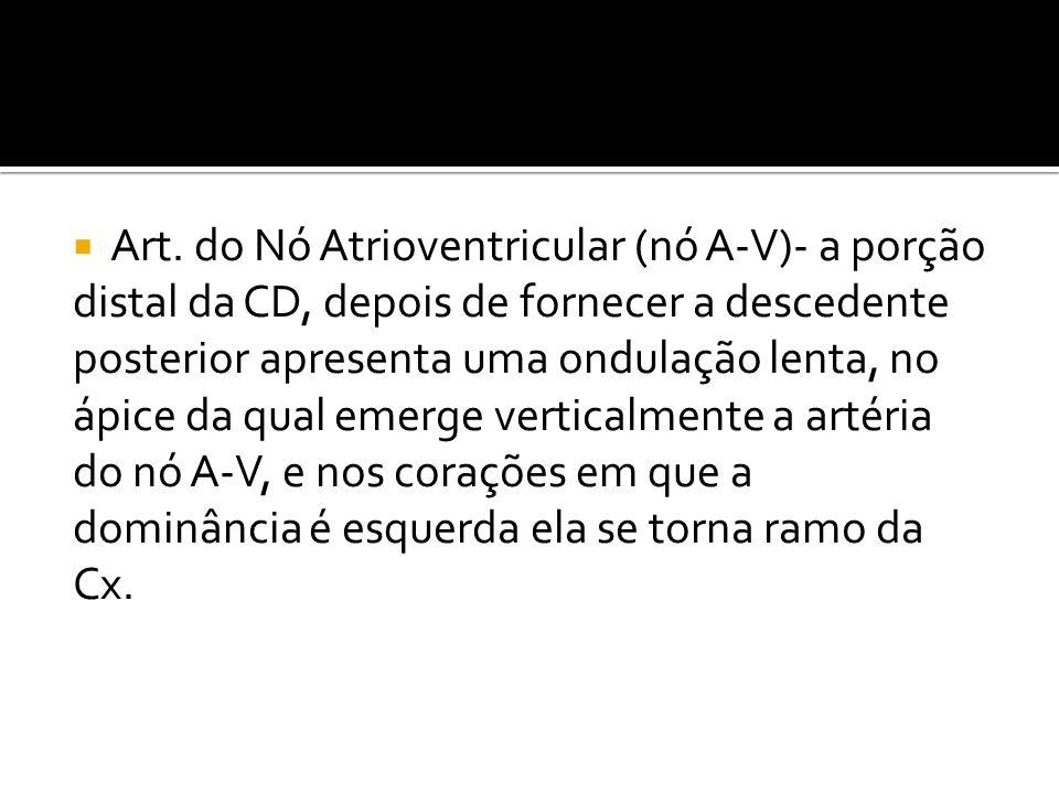  Art. do Nó Atrioventricular (nó A-V)- a porção distal da CD, depois de fornecer a descedente posterior apresenta uma ondulação lenta, no ápice da qu