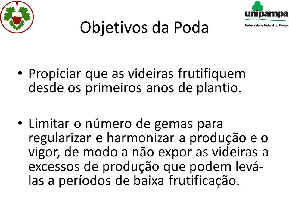 Objetivos da Poda • Propiciar que as videiras frutifiquem desde os primeiros anos de plantio.