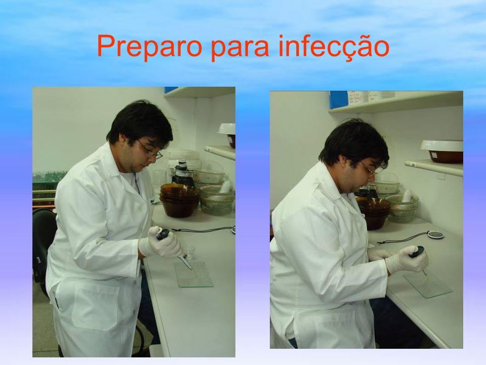 Analise de infecção