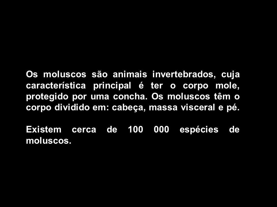 Os moluscos são animais invertebrados, cuja característica principal é ter o corpo mole, protegido por uma concha.