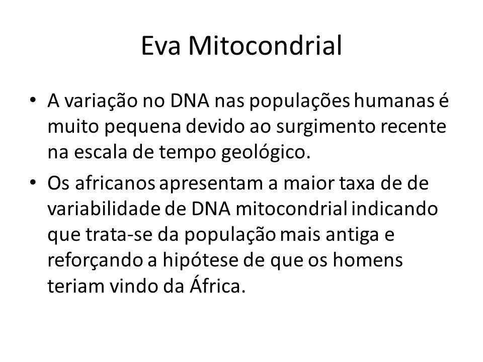 Eva Mitocondrial • A variação no DNA nas populações humanas é muito pequena devido ao surgimento recente na escala de tempo geológico. • Os africanos
