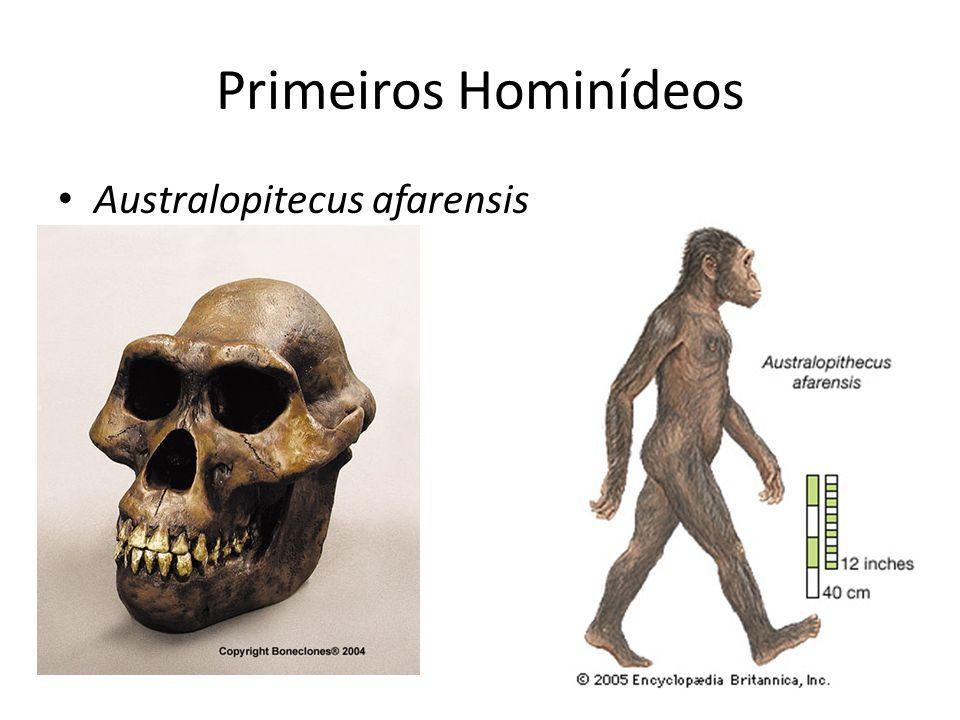Primeiros Hominídeos • Australopitecus afarensis