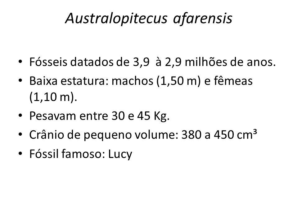 Australopitecus afarensis • Fósseis datados de 3,9 à 2,9 milhões de anos. • Baixa estatura: machos (1,50 m) e fêmeas (1,10 m). • Pesavam entre 30 e 45