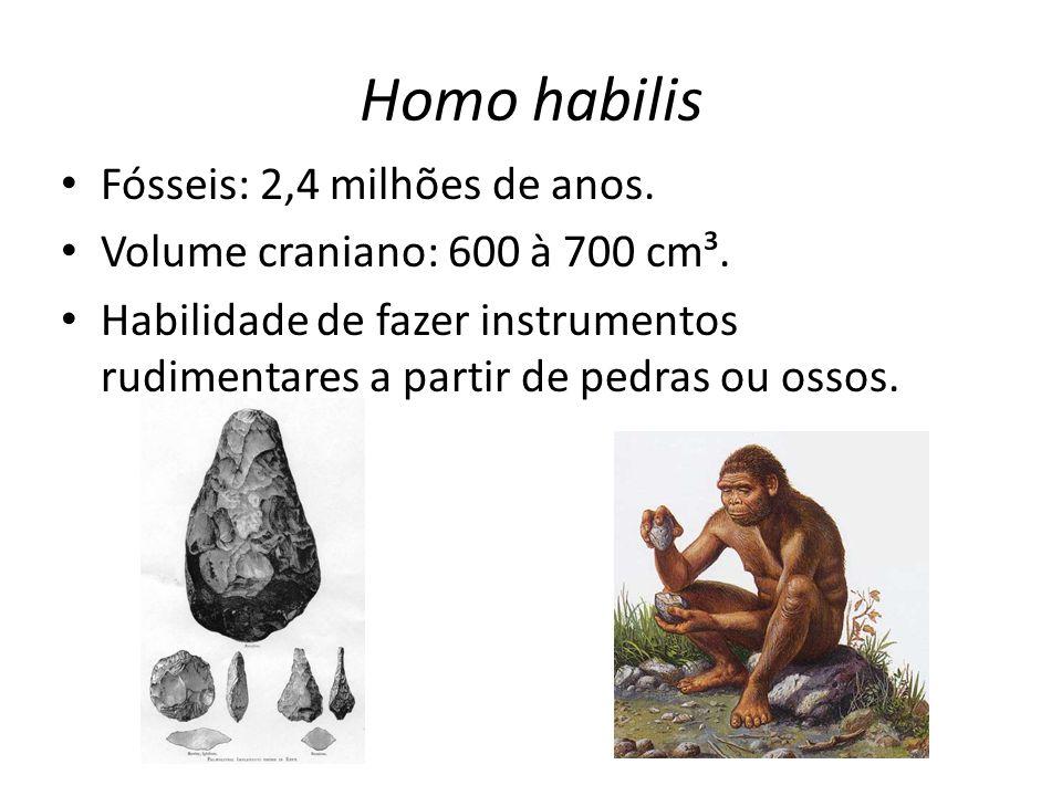 Homo habilis • Fósseis: 2,4 milhões de anos. • Volume craniano: 600 à 700 cm³. • Habilidade de fazer instrumentos rudimentares a partir de pedras ou o