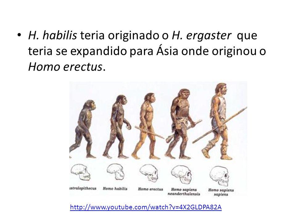 • H. habilis teria originado o H. ergaster que teria se expandido para Ásia onde originou o Homo erectus. http://www.youtube.com/watch?v=4X2GLDPA82A
