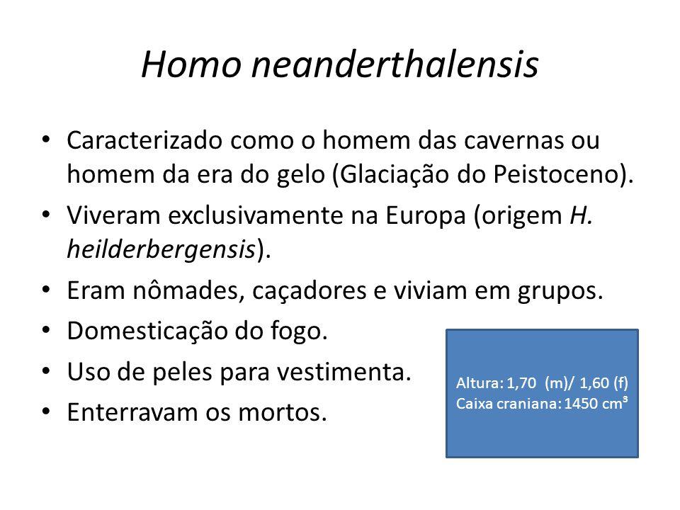 Homo neanderthalensis • Caracterizado como o homem das cavernas ou homem da era do gelo (Glaciação do Peistoceno). • Viveram exclusivamente na Europa