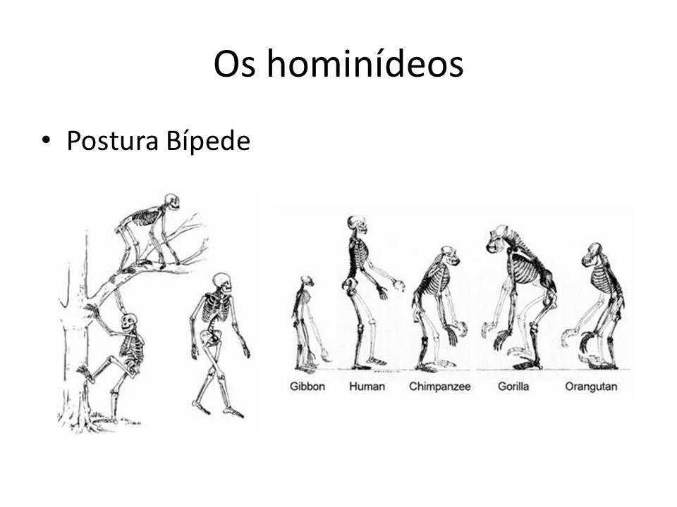 Os hominídeos • Postura Bípede