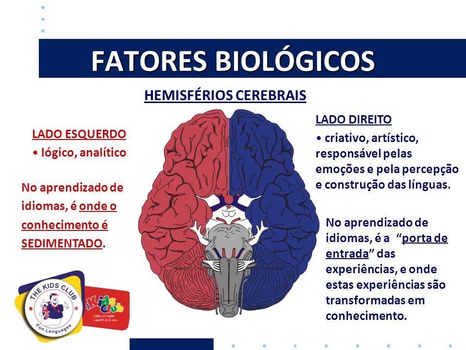 LATERALIZAÇÃO DO CÉREBRO PERÍODO DE APRENDIZADO MÁXIMO Crianças têm desempenho superior devido à esta maior interação dos dois lados do cérebro.