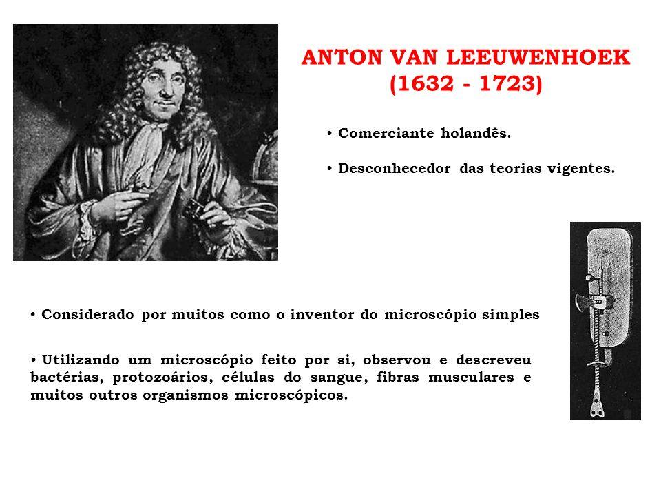 ANTON VAN LEEUWENHOEK (1632 - 1723) • Comerciante holandês. • Desconhecedor das teorias vigentes. • Utilizando um microscópio feito por si, observou e