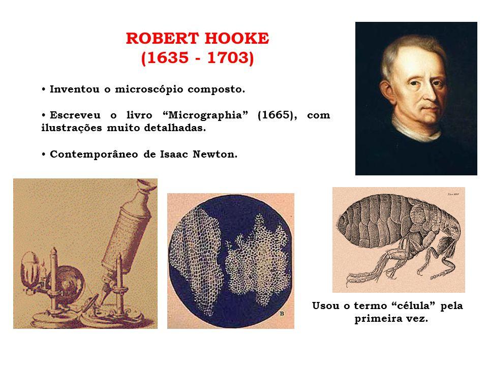 """ROBERT HOOKE (1635 - 1703) • Inventou o microscópio composto. • Escreveu o livro """"Micrographia"""" (1665), com ilustrações muito detalhadas. • Contemporâ"""